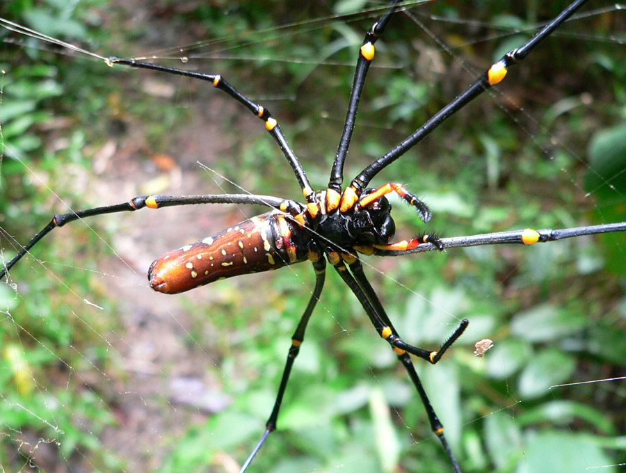 Borneo Adventure Elm Wildlife Tours Otago Peninsula
