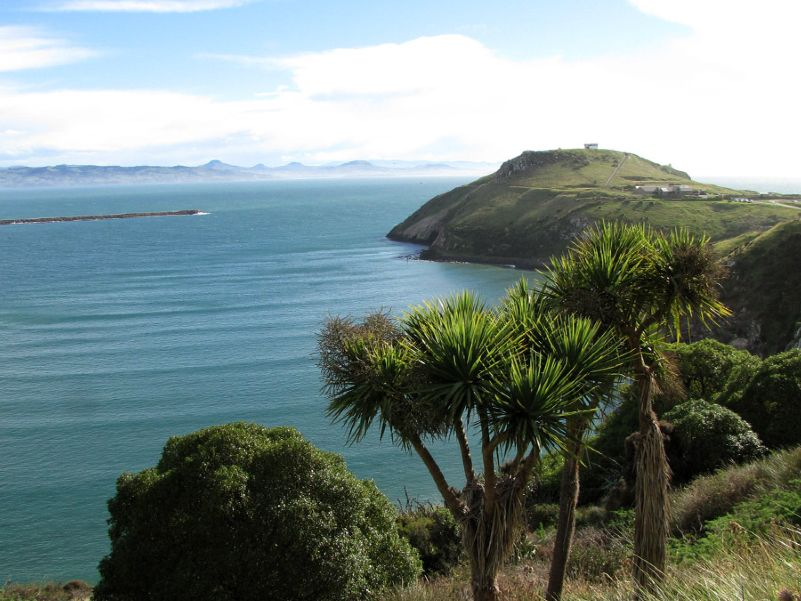 Taiaroa head - (Royal albatross breeding colony)